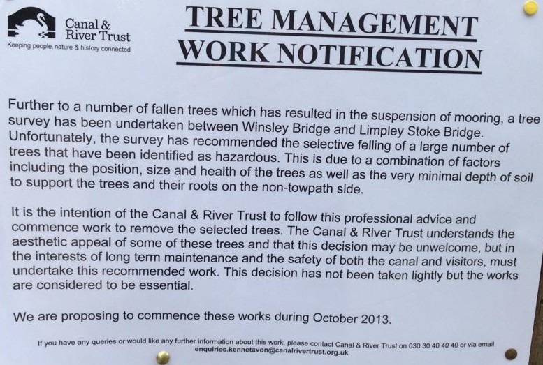 winsley tree felling2